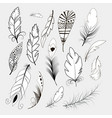 tribal feather bird nature wing element vector image