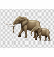 wild elephants on transparent background vector image vector image