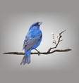 a croaking bird on a cherry blossom branch vector image vector image