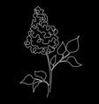 black lilac vector image vector image