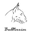 bullterrier vector image vector image