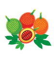 Gac Fruit Health Benefits with leaf vector image vector image
