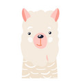 lama cute animal baface vector image