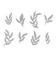 set elements set collection leaves herbs vector image vector image