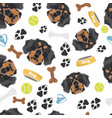 smiling dog dachshund vector image vector image