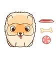 Cute pomeranian puppy