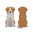 flat of sitting beagle dog vector image vector image
