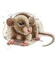 mouse artistic graphic color portrait a mous vector image vector image
