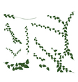A Set of Creeper Plant on White Background