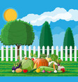 garden harvest with vegetables vector image vector image