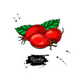 rosehip drawing isolated berry sketch on vector image vector image