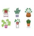 set ornamental plants in pots garden decoration vector image vector image