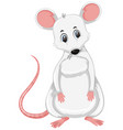 a white rat on white background vector image