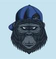 gorilla head cap vector image vector image