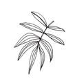 hand-drawn sketch of a plant isolated on white vector image vector image