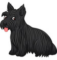scottish terrier dog breed vector image
