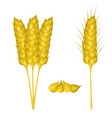 wheat ears set close up on white vector image