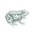 big adult frog drawn in vintage style detailed vector image