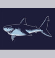 dangerous angry shark print graphic vector image
