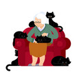 grandmother and cat sitting on chair granny cat vector image