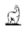 suri alpaca or huacaya side view retro black vector image vector image