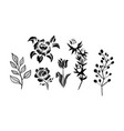 flowers and plants set monochrome botanical vector image vector image