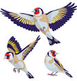 Goldfinch on white background vector image vector image