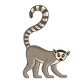 ring-tailed lemur isolated wild ape vector image vector image