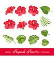 set tropical flowers elements vector image vector image