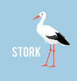 stork isolated on white background standing stork vector image vector image