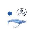 blue whale watercolor vector image
