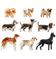 dog breeds icon set vector image vector image