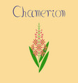 flat on background herbal chamerion vector image