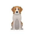lovely beagle in sitting position small hunting vector image