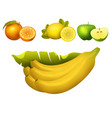 ripe fruits realistic juicy healthy vector image vector image