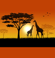 silhouette of giraffe at savanah vector image vector image