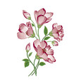 flower bouquet floral frame flourish greeting card vector image