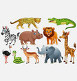 cartoon wild animals on white background vector image vector image