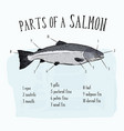 diagram showing parts of salmon vector image