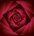 red rose flower abstract square background vector image