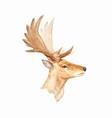 watercolor deer portrait vector image vector image