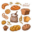 cartoon bread fresh bakery product flour ears vector image vector image
