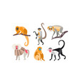 collection of monkeys of different breeds vector image