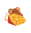 cute brown mouse eating big piece of cheese funny vector image