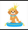 dog character in golden crown vector image vector image