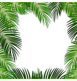 palm leaf on white background with place for your vector image vector image