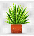 plant in pot on transparent background vector image vector image