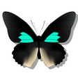 black butterfly on white background with shadow vector image
