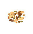 nut mix vector image vector image