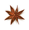 realistic dried anise star with pits vector image vector image